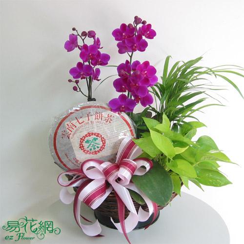健康飲品→普洱茶>父親節蝴蝶蘭禮籃
