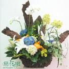 高貴典雅盆花