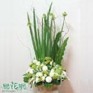 星燦盆花設計