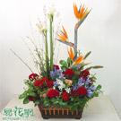 天堂鳥造型祝賀盆花