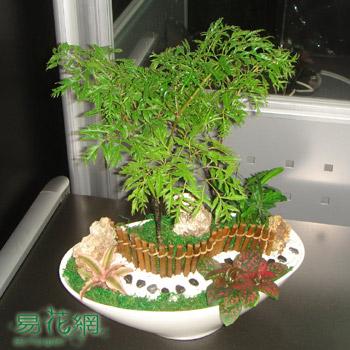 福祿桐造型組合盆栽